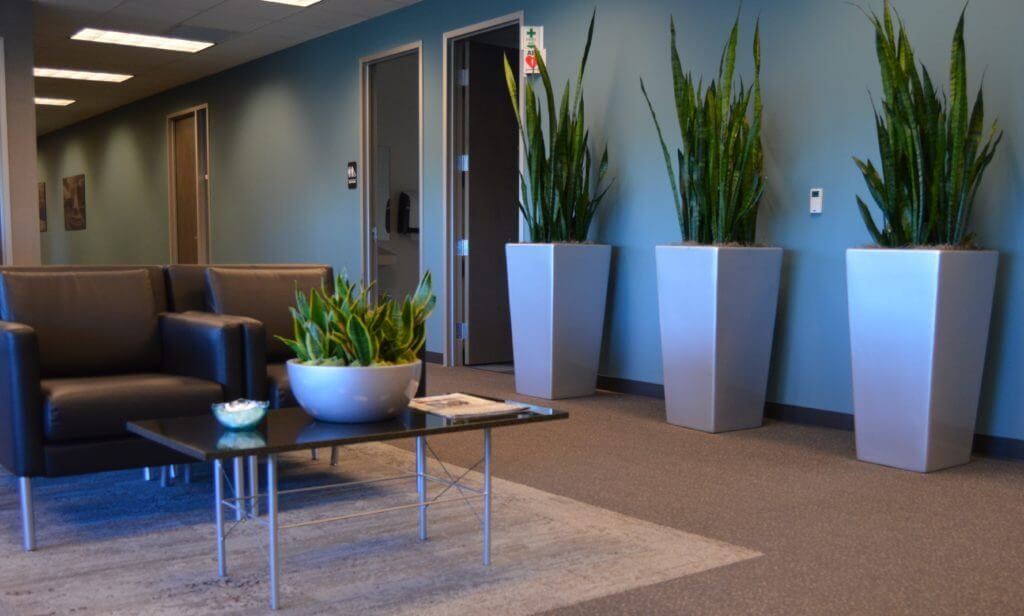 The Best Plants For Offices With Florescent Lighting Planterra