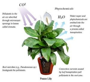 How Can Plants Improve Air Quality